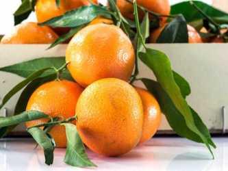 Caja de mandarinas 10 Kg