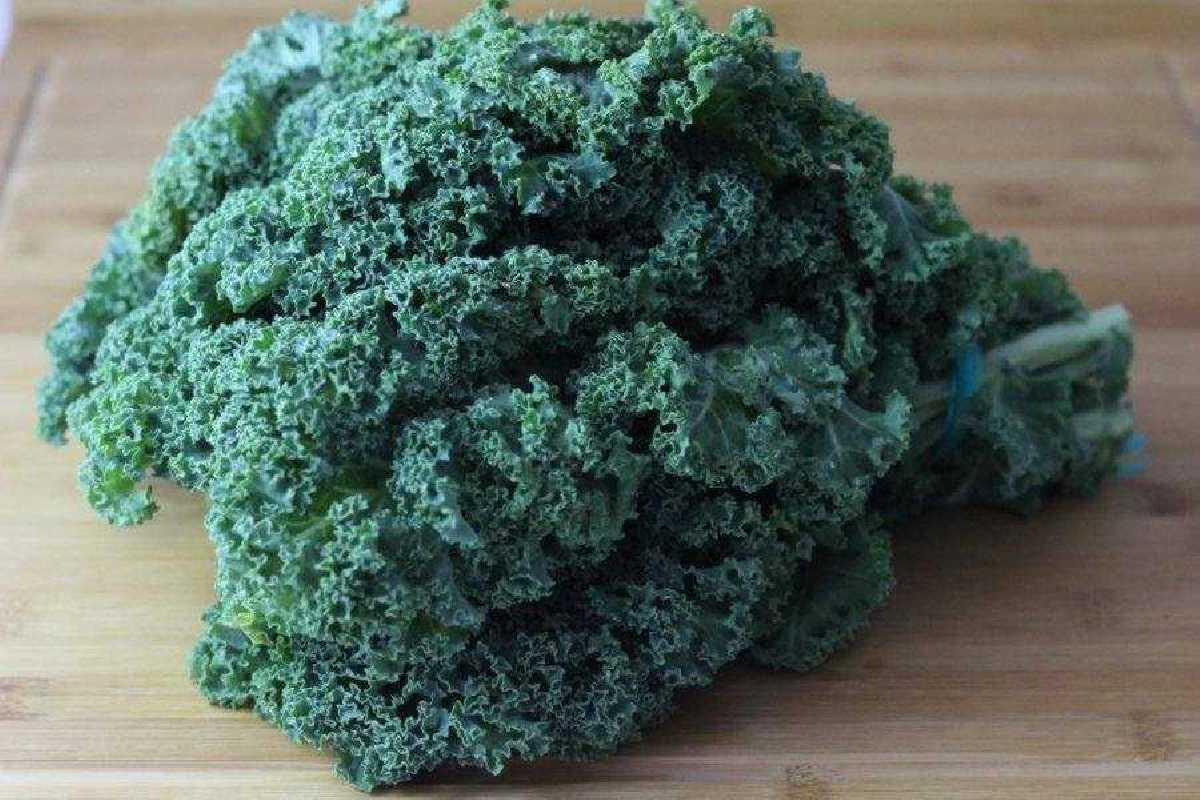 Kale-ecologico