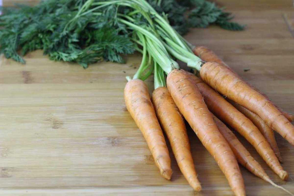 zanahorias-ecologicas-2