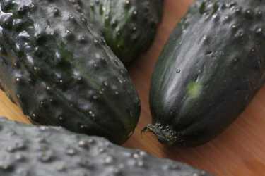 pepinos-ecologicos-2