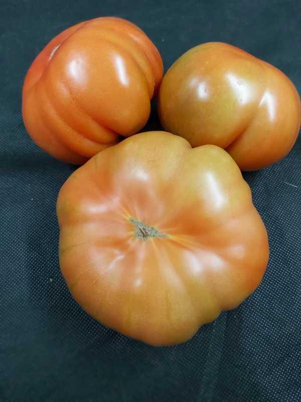 Tomate Terreno (400-500gr)