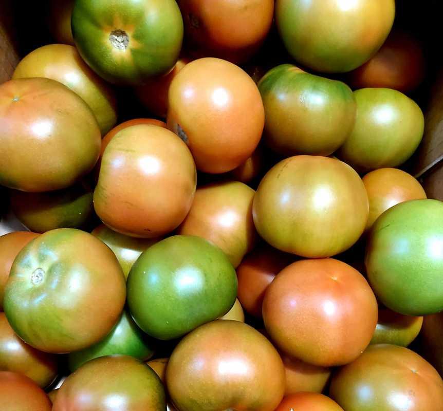 Tomate Bola (900-100gr)