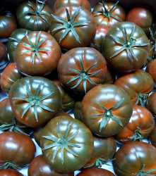 Tomate Bola Negro (400-500gr)